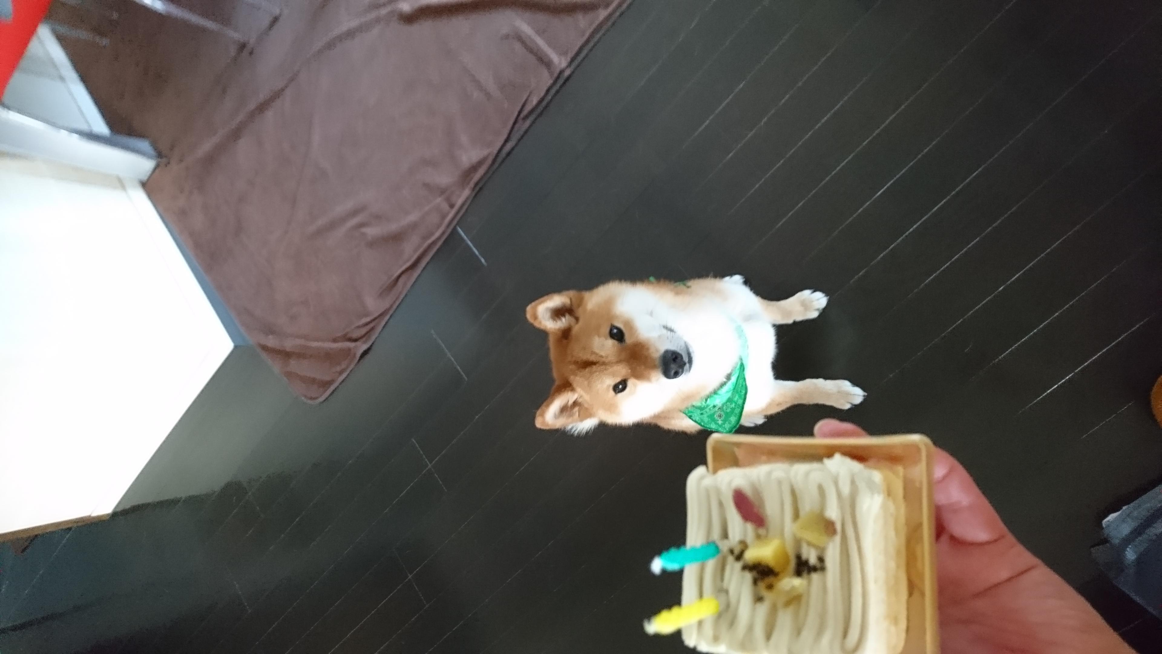 ソナタ 2歳 - 呉市の小料理屋・...