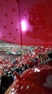 カープ赤傘